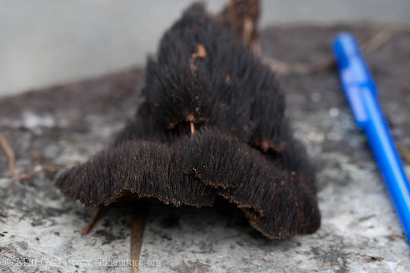 Mildew In Hair Hair Mold Under Weave Hair Human Wavy