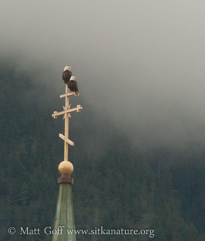 St. Michael's Bald Eagles