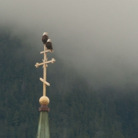 St. Michael's Bald Eagles