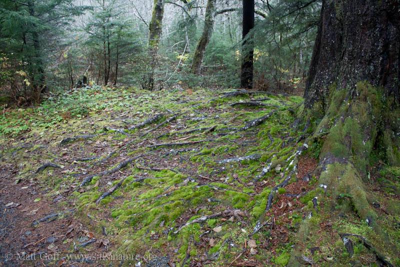 Bryophyte Habitat