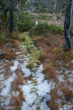 Bear Trail