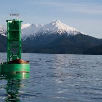 Steller's Sea Lion on Buoy