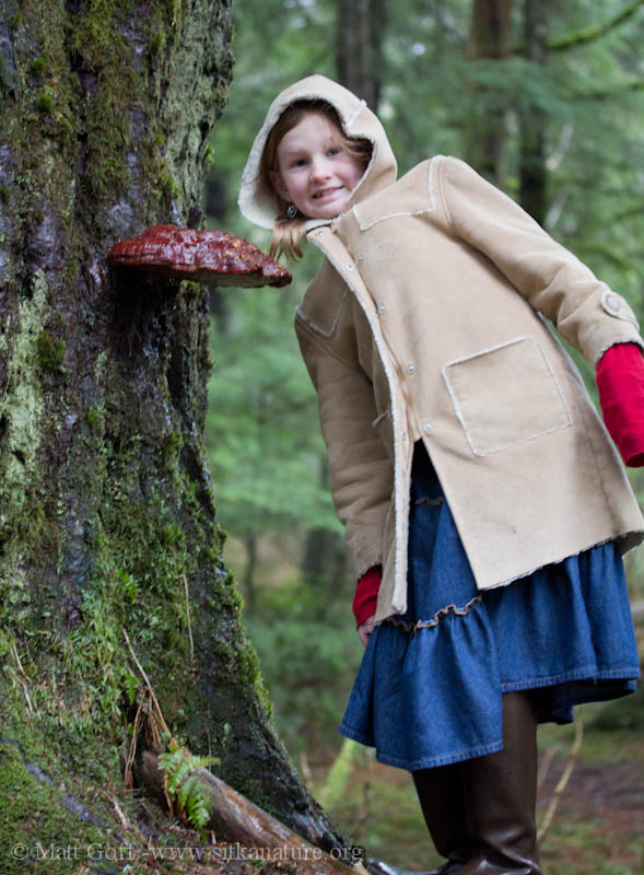 Rowan with a Shelf Fungus