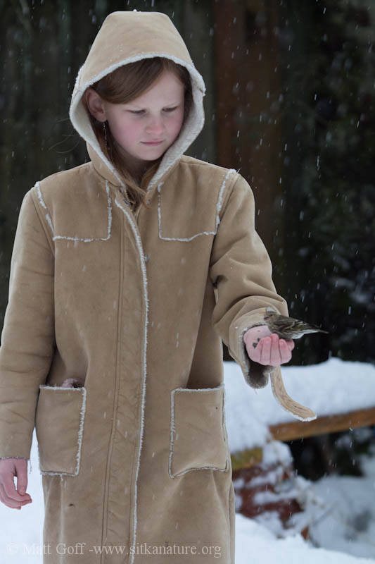 Rowan with a Pine Siskin