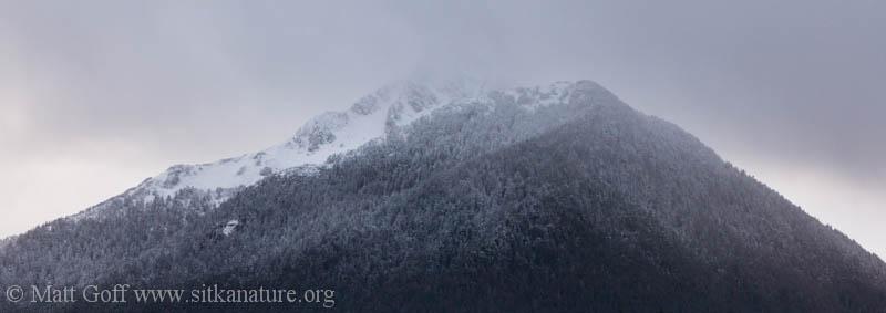 Verstovia Snow