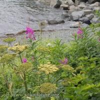 Shoreline Vegetation