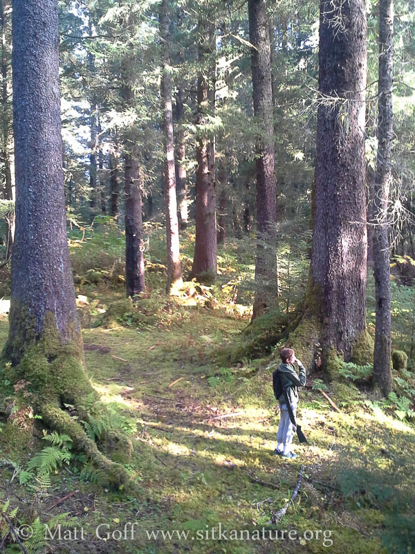Connor in Open Forest
