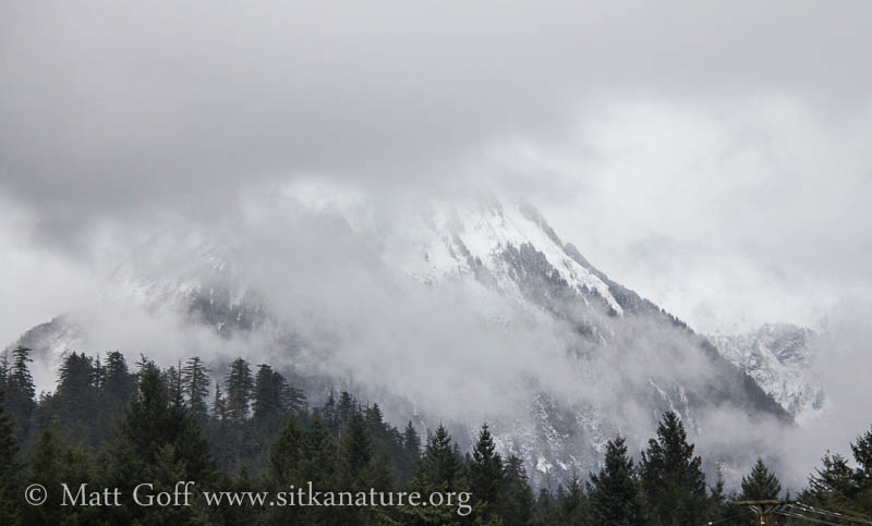 Shrouded Middle Sister