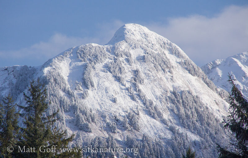 Fresh Snow on the Middle Sister