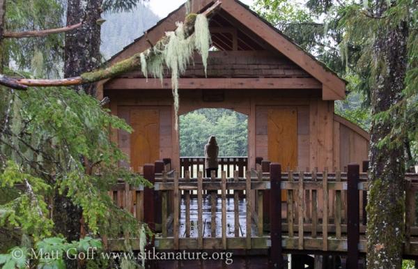 Bird Viewing Shelter
