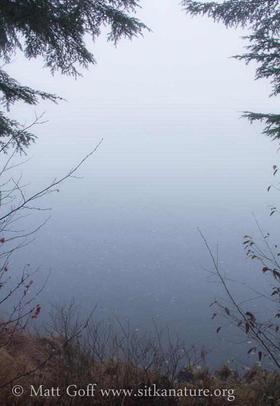 Swan Lake Fog
