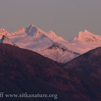 Alpenglow on Fresh Snow