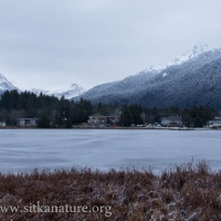 Swan Lake Winter View