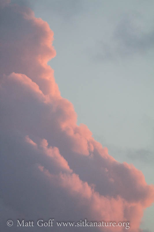 Pink Edged Clouds