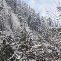 Bear Mountain HIllside