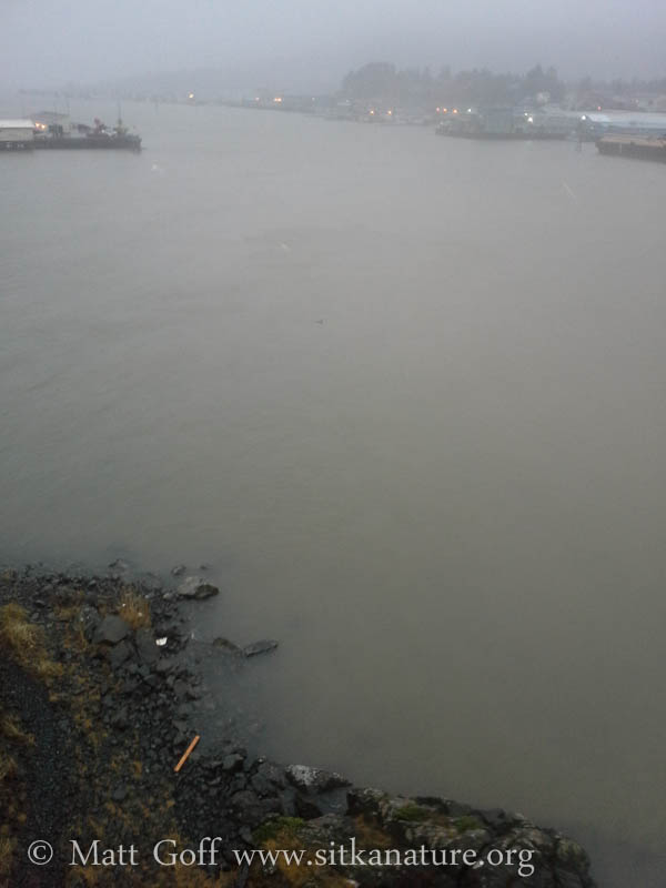 Discolored Waters in the Channel