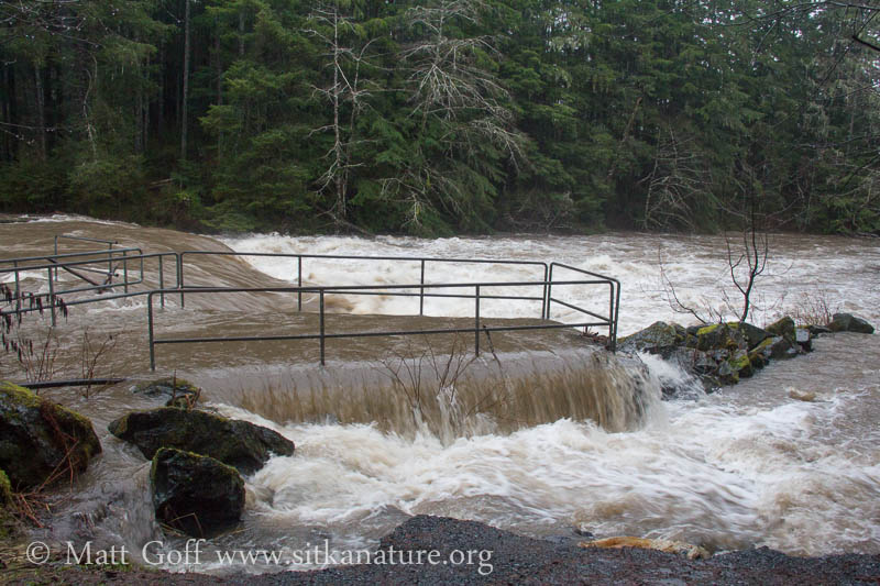 High Water at the Flume Intake