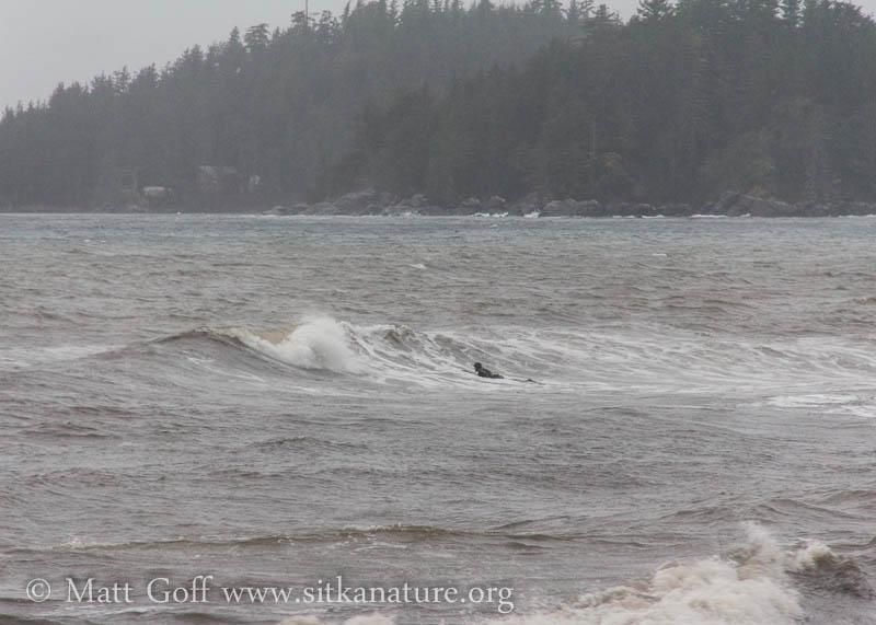Surfing Muddy Waters
