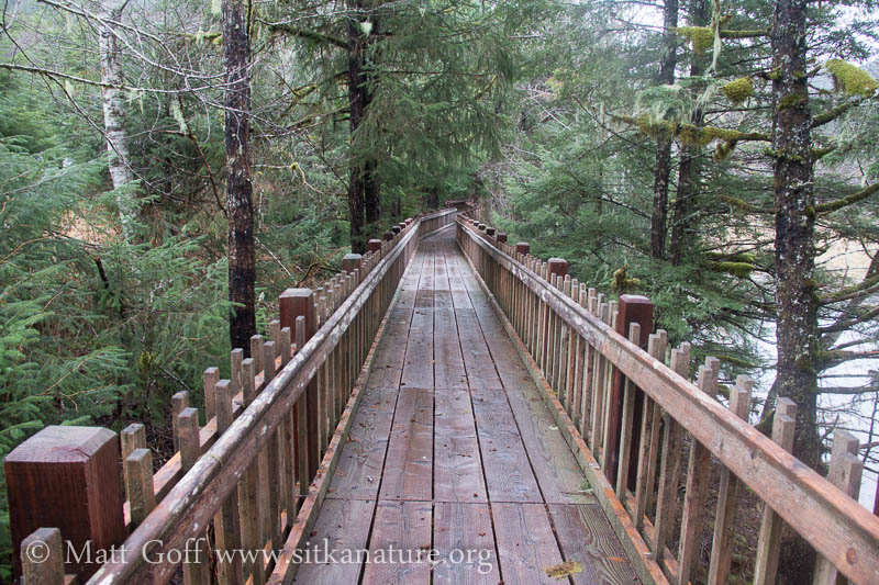 Estuary Life Trail Boardwalk