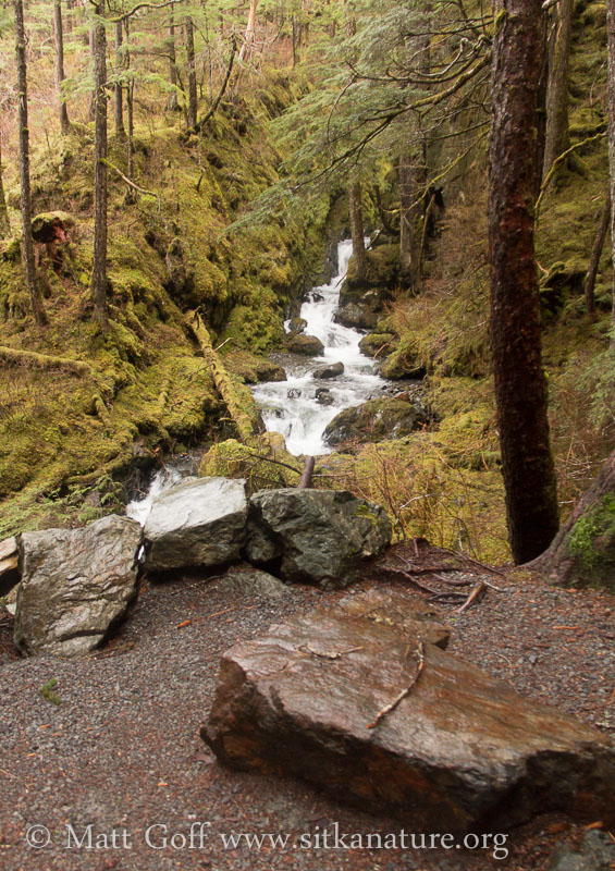 Herring  Cove Creek Viewpoint