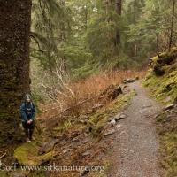 Trail-side Spruce