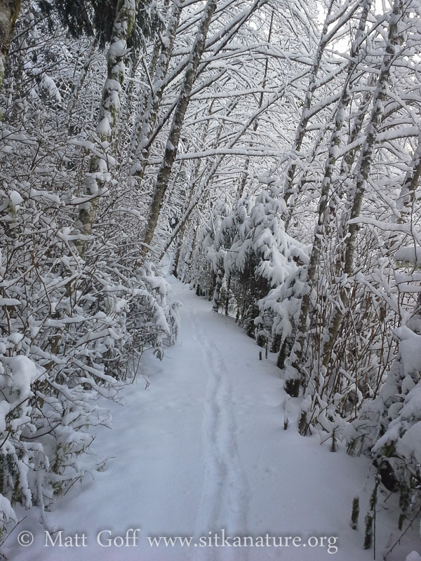 Totem Park Trail after Snow