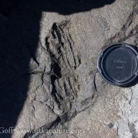 Graywacke Imprint