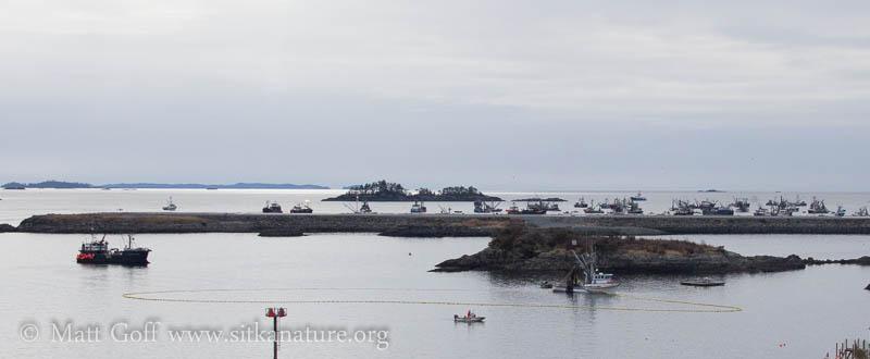 2014 Herring Fishery 3rd Opening