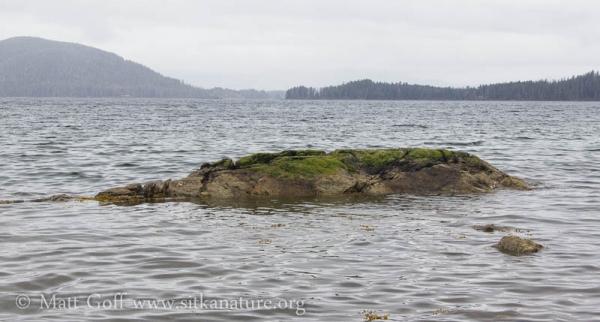 Starrigavan Bay Outcrop