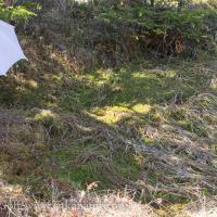 Sphagnum lindbergii Habitat