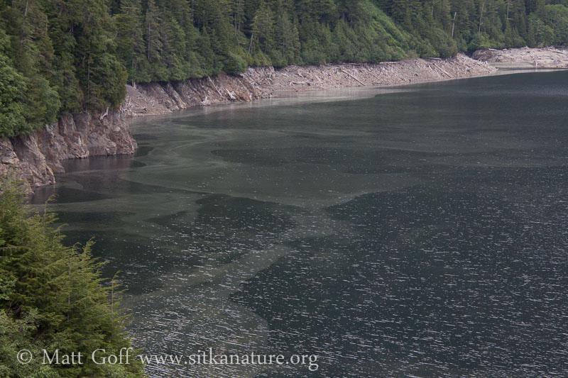 Blue Lake Pollen