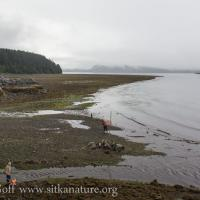 Low Tide at Sage Beach