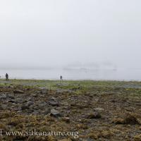 Foggy Low Tide