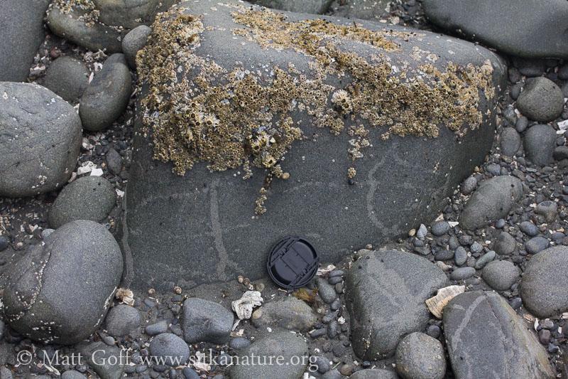 Sand Tracks on Rock
