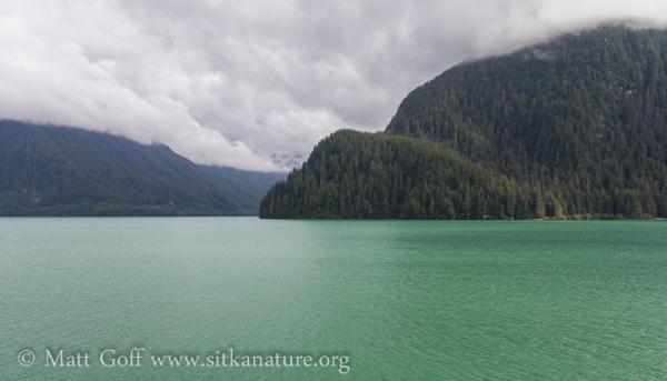 Green Water in Silver Bay