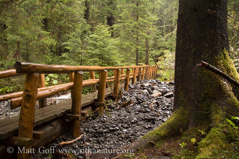 Herring Cove Trail Bridge