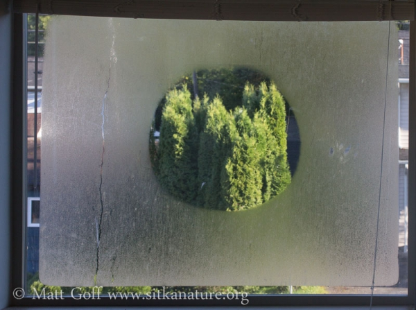 Dew Circle on Window