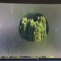 Dew Circle on Window