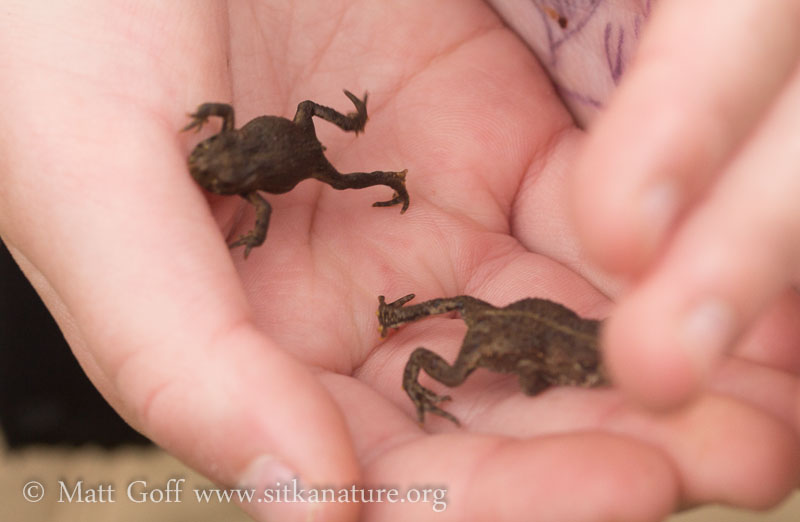 Two Small Toads