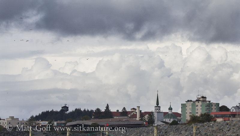 Cumulus over Town