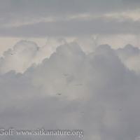 Cumulus Cloud Formations