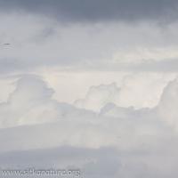 Cumulus with Pileus Cloud