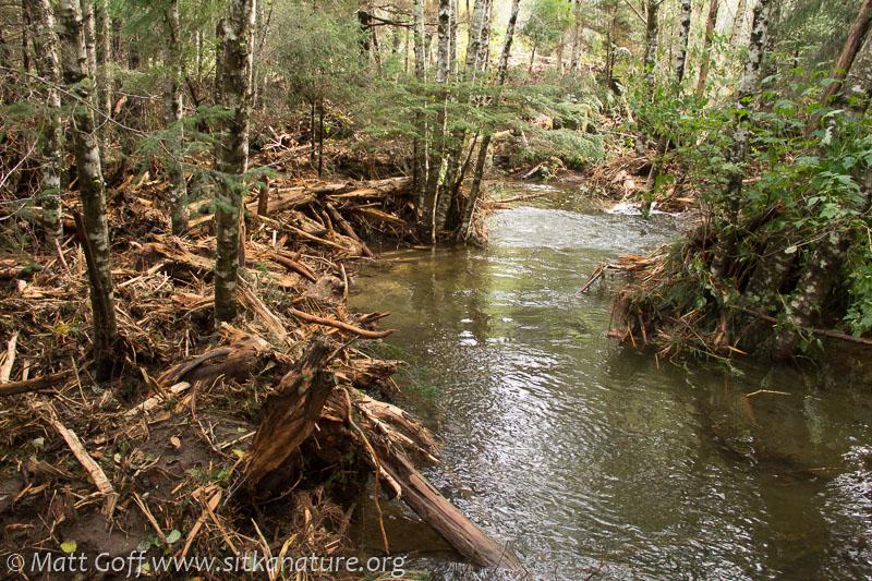 Debris in Forest