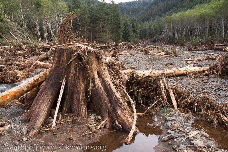 Logging Stump
