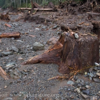Stumps in Washout Zone