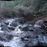 Starrigavan Creek