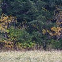 Fall at Starrigavan Estuary