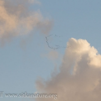 Migrating Geese and Clouds
