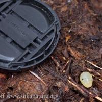 Mystery Eggs
