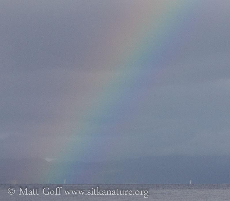 20141026-rainbow_whale_spouts-2.jpg